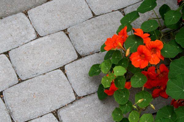 Paakuva perinnekivi, kukat